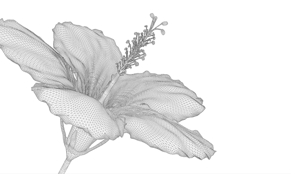 hibiscus blossom wireframe model
